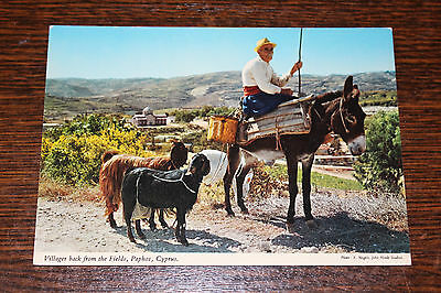 Villager back from the Fields, Paphos, Cyprus Postcard