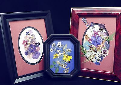 Pressed Summer Flower Pictures #6 ~ Photo Frames