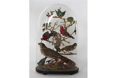 Victorian Taxidermy Bird Group Under Glass Dome