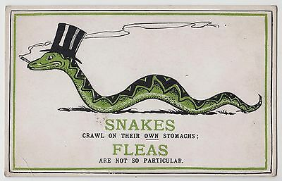 """POSTCARD - comic green smoking snake in top hat, """"fleas are not so particular"""""""