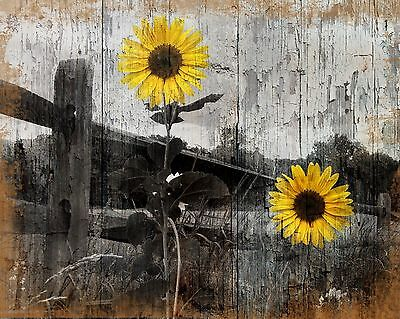 Rustic Sunflower Country Farmhouse Home Decor Wall Art Matted Picture