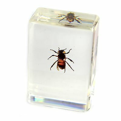 "Honey Bee Paperweight (1.8x1.1x0.8"")"