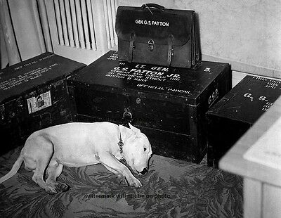 """General George S Patton's dog """"Willie"""" day of his death 8""""x 10"""" WWII Photo 320"""