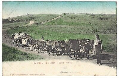 SOUTH AFRICA A Typical Ox Wagon, Old Postcard by Epstein, Unused