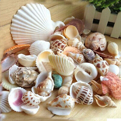 Natural Craft Sea Shells Wedding Table Seashells Decor Aquarium Mixed 100g