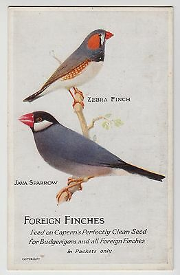 POSTCARD - Capern bird food seed advert, Foreign Finches, Zebra, Java Sparrow