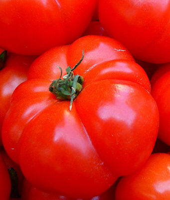 Liveseeds - Heirloom Bright Red Giant Meaty Beefsteak Tomato 20 Seeds.