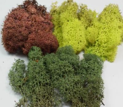 WWS Mixed, Green and Brown Lichen / Model Moss 60g
