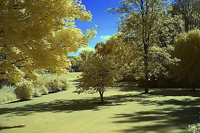 Canon EOS 5D Mark II Mk2 590nm 'Goldie' IR SUPER COLOR infrared converted camera