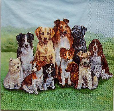 Pedigree Dogs - 5 Servietten - Ambiente
