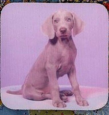 WEIMARANER PUPPY Rubber Backed Coasters #0528