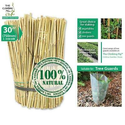 "75cm (30"") Natural Bamboo Stakes 