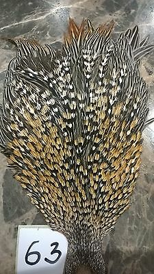 Jungle cock cape, Grade B, fly tying feathers (63)