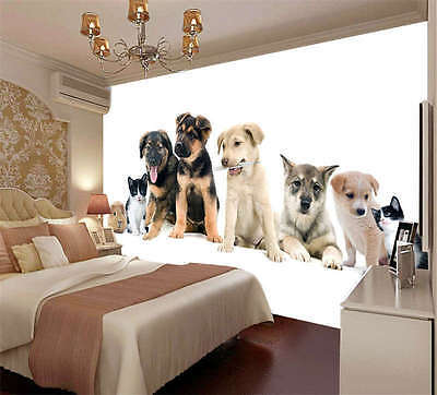Cue Dogs Cat Guinea Pig Full Wall Mural Photo Wallpaper Print Kids Home 3D Decal