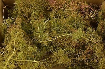 War World Scenics Seafoam Trees Mixed Sizes - Sea Foam Modelling Scenery Terrain