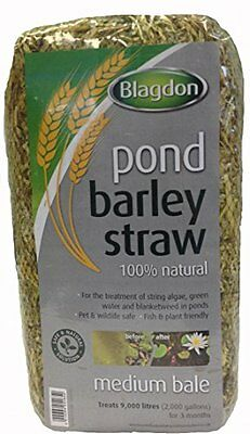 Blagdon Medium Barley Straw Bale