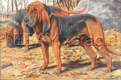 DOG BLOODHOUND tracking search dogs, 85+ Yr Old Print