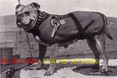 DOG Bulldog English Naval Mascot, Named, 1930s Print