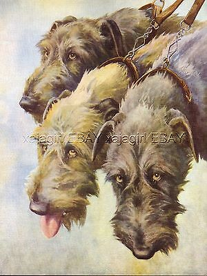 DOG Irish Wolfhounds, Beautiful 1930s Color Linen Print, Nina Scott-Langley