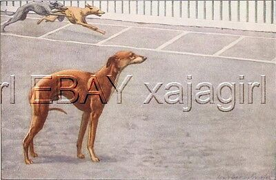 DOG Whippet Racing, Coursing Dogs, 85+ Year Old Print
