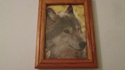 Wolf Face Framed Picture
