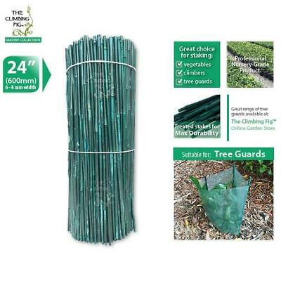 "60cm (24"") Green Bamboo Stakes 