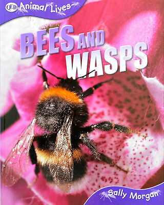 Bees and Wasps animal lives CHILDREN'S BOOK new