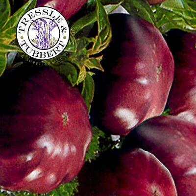 RARE Tomato Black Elephant - 10 seeds -  UK SELLER