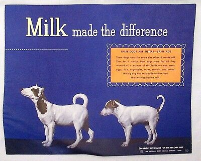 Vtg 1964 Graphic Art National Dairy Council Milk Advertising Poster Dog Pig