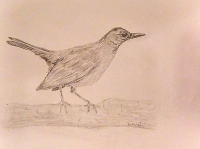 """""""Early Bird"""" Graphite Pencil Drawing - Signed Original Unframed 11"""" x 14"""""""