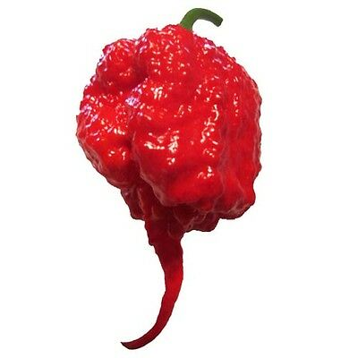 Carolina Reaper HP22BNH7 Red Hot Chili Pepper Seeds 25 PCS WORLD'S HOTTEST!