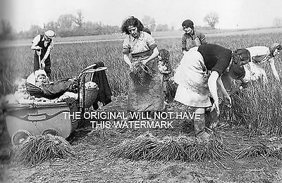 Gathering Onions North Fleet Kent 1943 Vintage Mounted Print Farming History