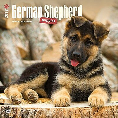 2017 German Shepherd Puppies Calendar - 12 x 12 Wall Calendar