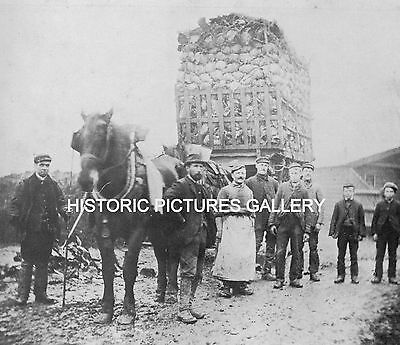 Cabbage Loading William Bonds Farm Ilford Essex 1895 Old Mounted Print Ancestry