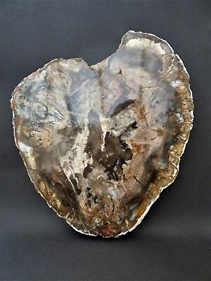 Attractive Polished Madagascar Fossil Wood 16.5 x 16.7 cm -Free display stand.