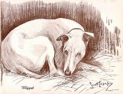 DOG Whippet Snap Hound, Beautiful 1930s Art Print by Nina Scott-Langley
