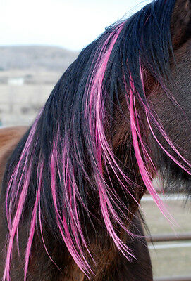Horse Pony Colour Mane Tail Extensions Equine Fashion Bling Tack Brush Party
