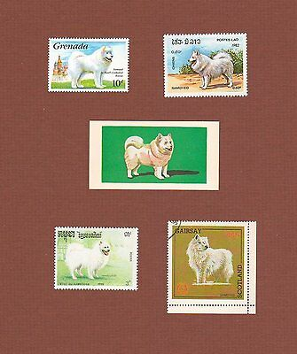 Samoyed dog postage stamps and cards, set of 5