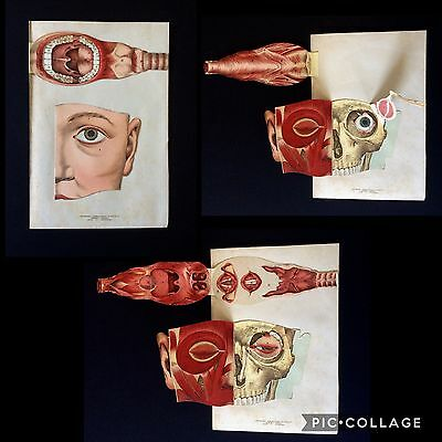 Antique 1890s Medical HEAD Dissection MOUTH German Anatomy Fold Out Bookplate