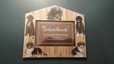 Portuguese Water Dog Picture Frame New Picture Hound Beautiful Dogs