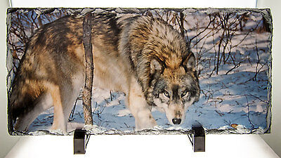 Wolf Staring Photo On Natural Slate - 5 1/2 x 11 1/2