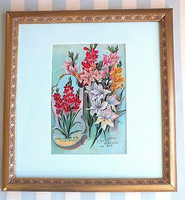 Framed*Original 1895*Victorian*Gladiola Bulb/Seed Catalog*Pink*Red*Flowers*Rare