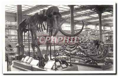 CPA Bruxelles Musee Royal d histoire naturelle Galeries nationales Mammouth