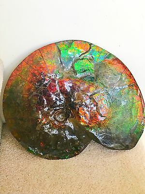 Gorgeous Canadian Ammolite  Gem Grade Double Sided