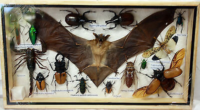 Real Exotic Bat Scorpion Spider Cicada Insect Display Beetle Bug Taxidermy