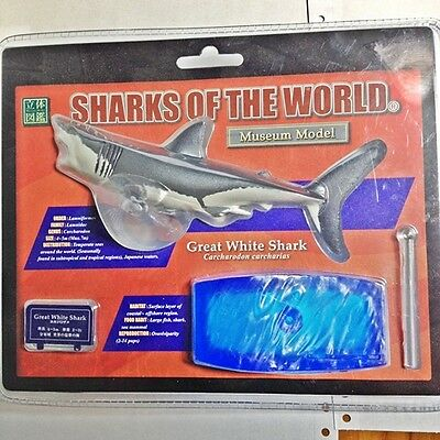Rare Colorata  Museum Model SHARKS OF THE WORLD - Great white Shark
