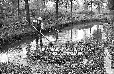 Watercress Beds Harpended Herts 1935 Vintage Mounted Print Farming History