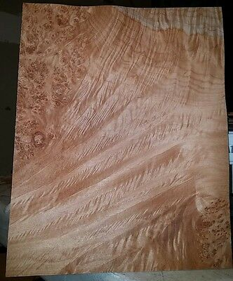 "1 piece of maple burl raw wood veneer  8 1/2"" x 11"" w/ quilted features"