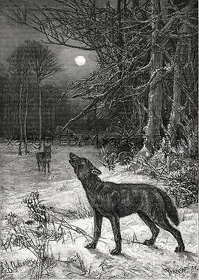 Wolf Pack Howling, Winter Scene Full Moon, Beautiful Large 1880s Antique Print