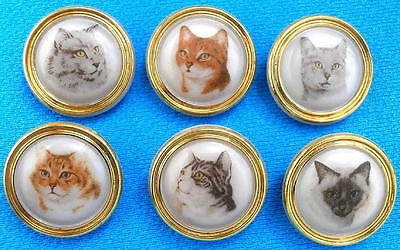 6 Czech Glass Decal Buttons #G309 - SWEET COLLECTION of CATS